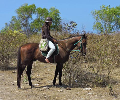 ところどころで馬が葉っぱを食べて休憩します