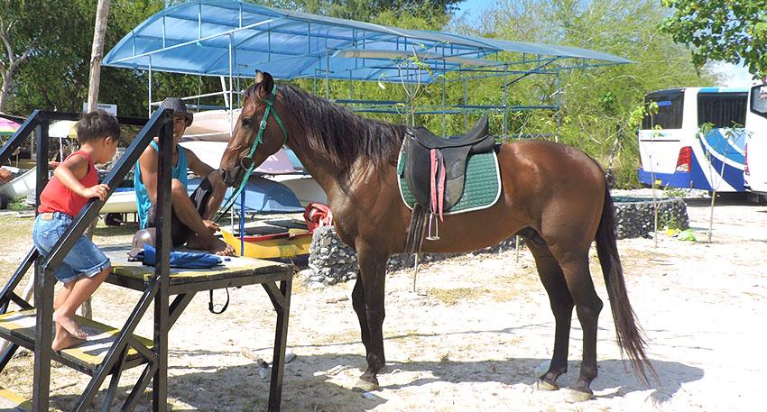毛並みの美しい馬